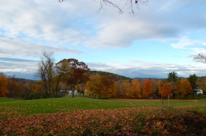This year's foliage has been astoundingly beautiful in Ashfield, Mass. - which is situated in the foothills of the Berkshires.