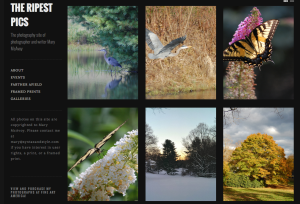 TheRipestPics on Gridspace at WordPress