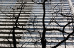 Tree against highrise