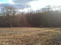 cow pasture & boardwalk trail