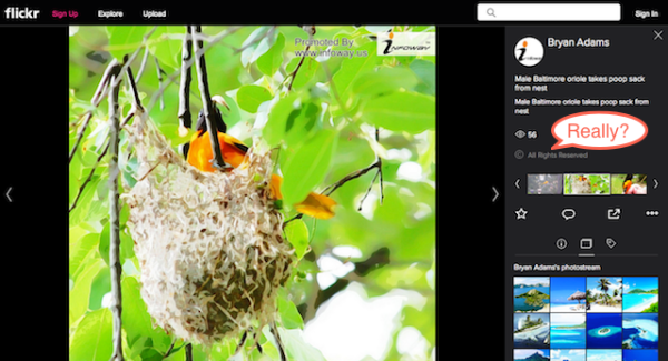 my Baltimore oriole image on infoway site