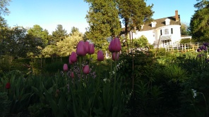 pink tulips at Stevens Coolidge Place