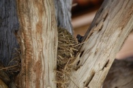 bird nest in the rustic pavilion at Tower Hill Botanic Garden