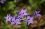 Tower Hill Botanic Gardenphlox
