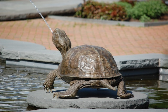 turtle fountain spouting water from mouth