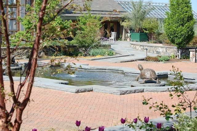 turtle fountain and decorative pool